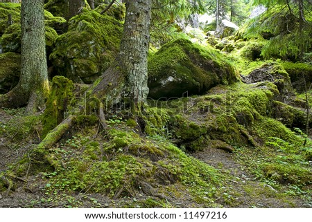 Tree branch covered in thick bright green moss