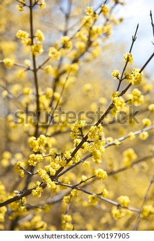 Tree branch in bloom - stock photo