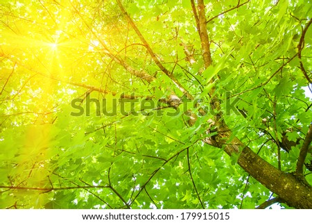 Tree branch in the woods, with lens flare effect added in post production   - stock photo