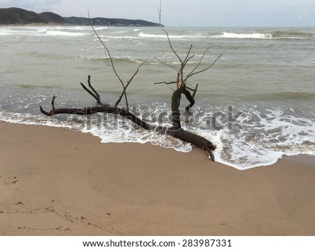 tree branch on beach - stock photo