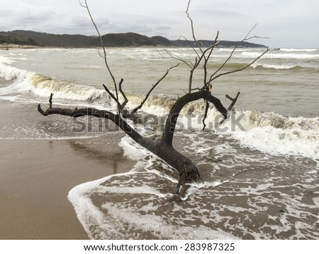 tree branch on beach just after storm - stock photo