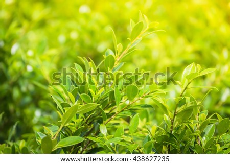 Tree branch over blurred green leaves background, nature background