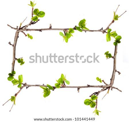 Tree. Branch. Spring. Frame. - stock photo