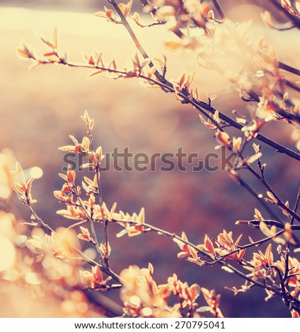 tree branch with buds / romantic toned spring background with fresh leaves and bokeh/ selective focus - stock photo
