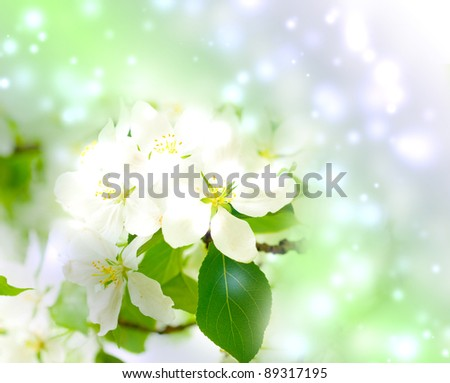Tree branch with cherry flowers over green background - stock photo