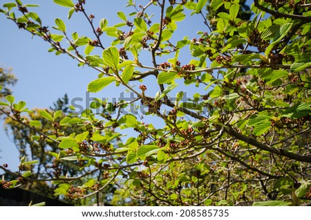 Tree branch with green leaf and blooming flower against blue sky background - stock photo