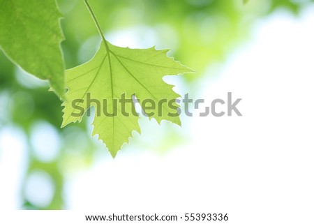 tree branch with green leaves - stock photo