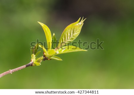 tree branch with spring foliage in the foreground - stock photo