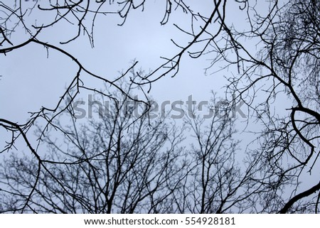 tree branches against the sky. Fairy gloomy forest.