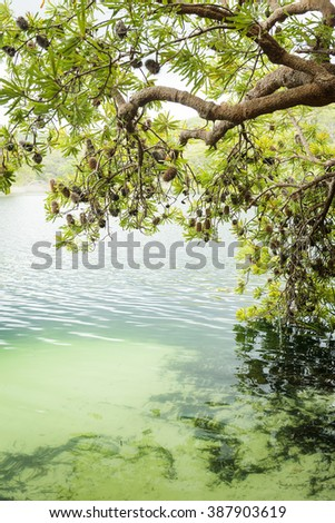 Tree branches and leaves hang above Blue Lake on North Stradbroke Island, Queensland, Australia - stock photo