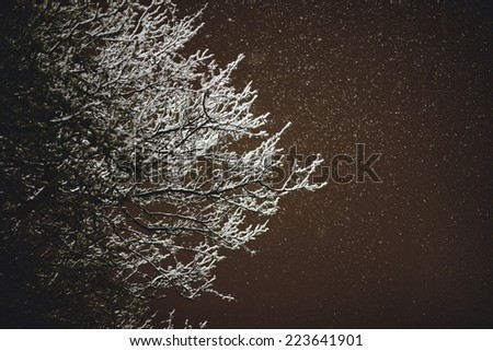 Tree branches covered in snow during snowstorm at night time - stock photo