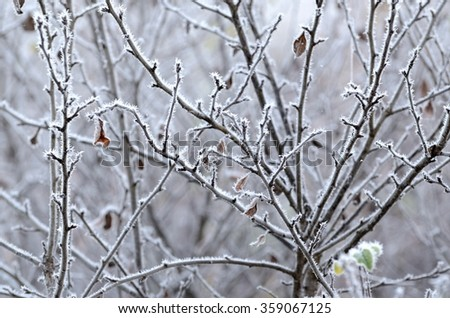 Tree branches  covered with hoar frost close-up (shallow DoF) - stock photo