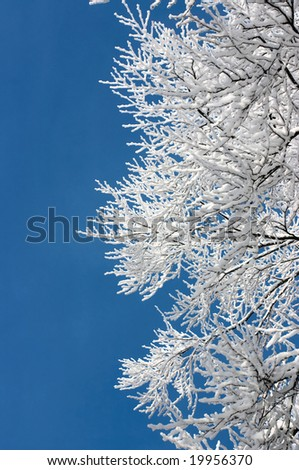 Tree branches covered with hoarfrost against blue sky