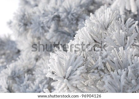 Tree branches covered with snow - stock photo