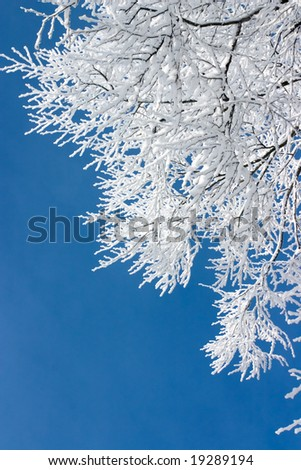 Tree branches covered with white frost against a blue sky