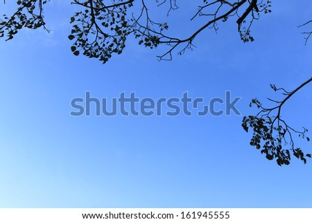 Tree branches framing blue sky - stock photo