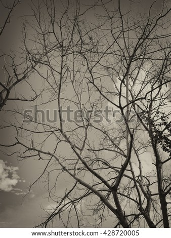 Tree branches in black and white color style.