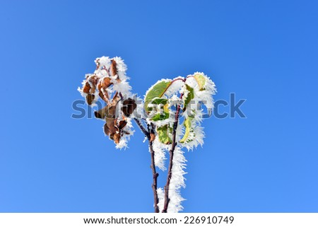 Tree Branches in Hoar Frost on Blue Sky Background