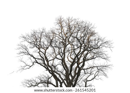 tree branches on the white background - stock photo