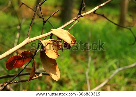 Tree branches or twigs in autumn - stock photo