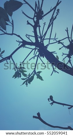Tree branches reaching the sky.