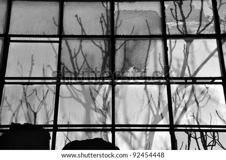 Tree branches shadow on broken stained factory window glass. Black and white. - stock photo
