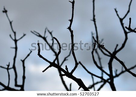 Tree branches silhouette against moody sky. Selective focus.