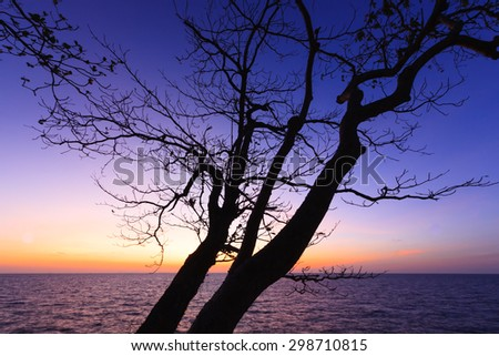 Tree branches silhouette by the sea and sky background at sunrise.