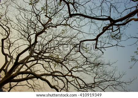 tree branches silhouette on blue and orange sky