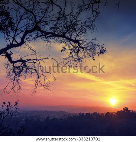 Tree branches silhouette with scenic sunset sun over colorful sky background. Los Angeles, California. - stock photo