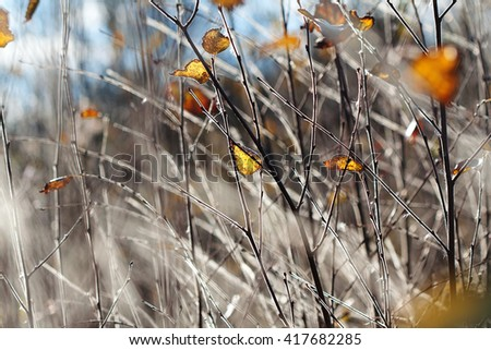 tree branches under hoarfrost in autumn - stock photo