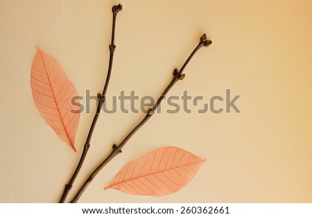 Tree branches with leaves background - stock photo