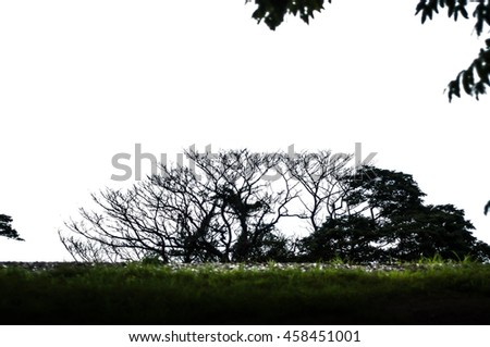 Tree branches without leaves are glossy black side of a white background.Isolate. - stock photo
