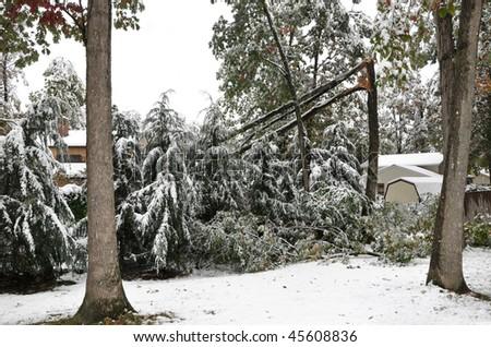 Tree broken by heavy snowfall - stock photo