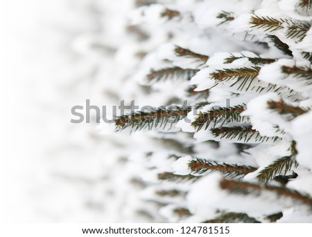 tree brunches with snow - stock photo