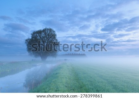 tree by river in morning sunrise fog - stock photo