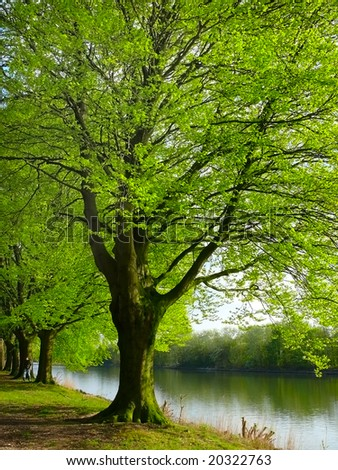 Tree by the river - stock photo