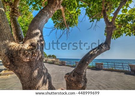 Tree by the sea in Alghero, Italy - stock photo
