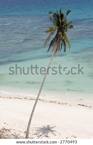 tree by the shore - stock photo