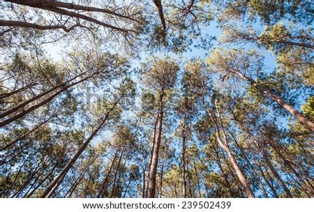 tree canopy - stock photo