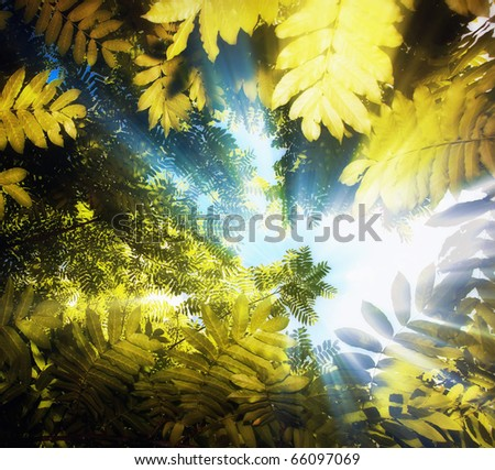 Tree canopy & Tree Canopy Stock Photo 66097069 - Shutterstock