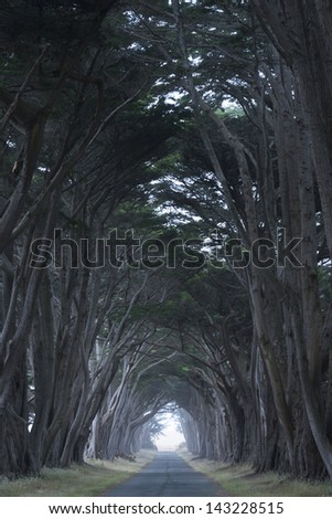 Tree canopy arching over a misty road, California, USA - stock photo