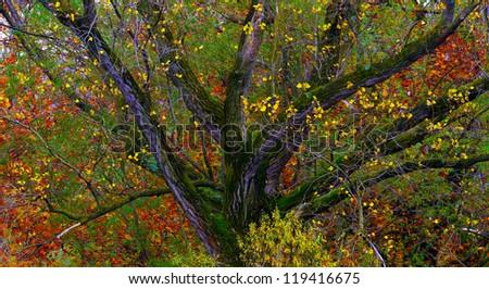 Tree Castle in Autumn - stock photo