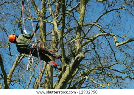 tree climber hanging by a rope - stock photo