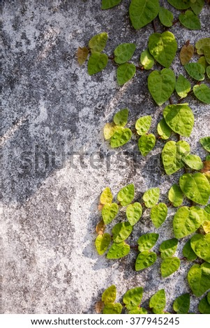 Tree climbing on the old wall - stock photo
