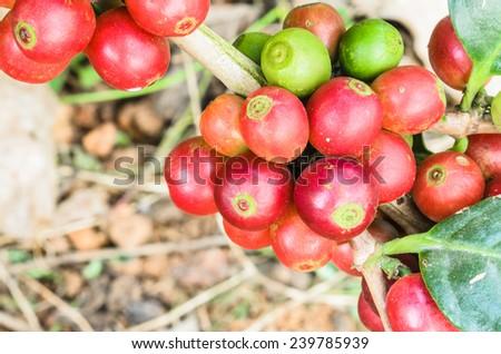 tree coffee wait crop - stock photo