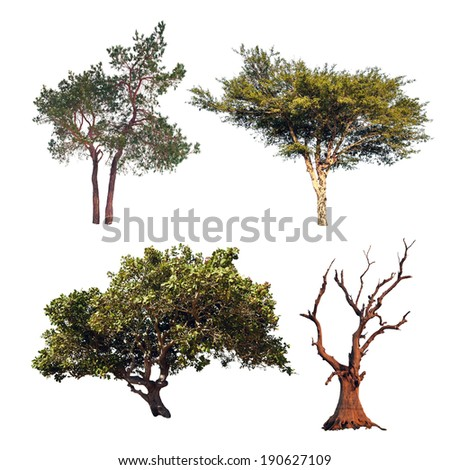 Tree collection. Four different trees isolated on white background - stock photo