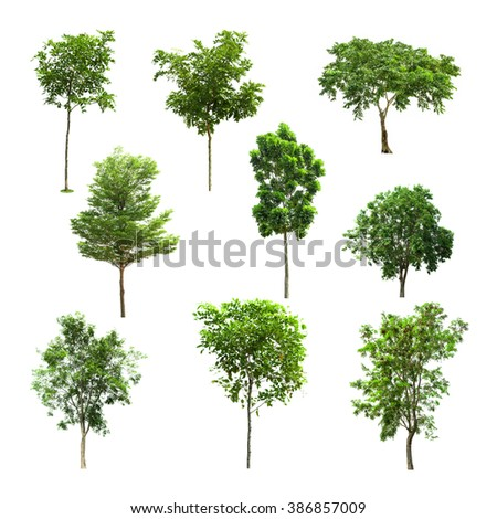 Tree collection set isolated on white background