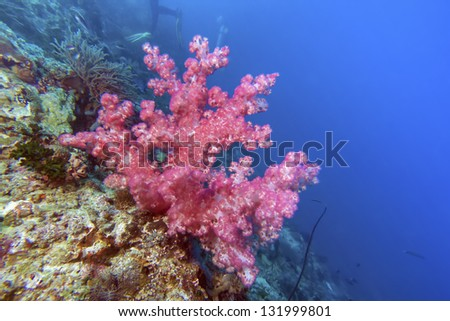 tree coral - stock photo