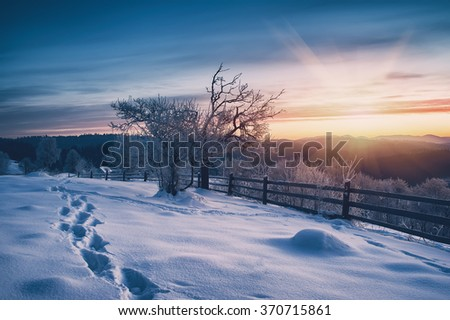 tree covered by frost on sunset. natural winter vintage background - stock photo